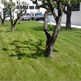 Jacques brunet jardins entretien de jardin toulouse for Jardinier conseil